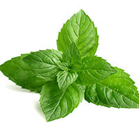 Peppermint (Leaf)