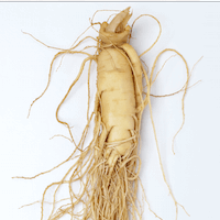 American Ginseng Root Powder